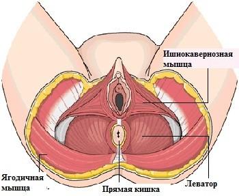 Методика облегченной промонтофиксации с передней и задней кольпоррафией собственными тканями