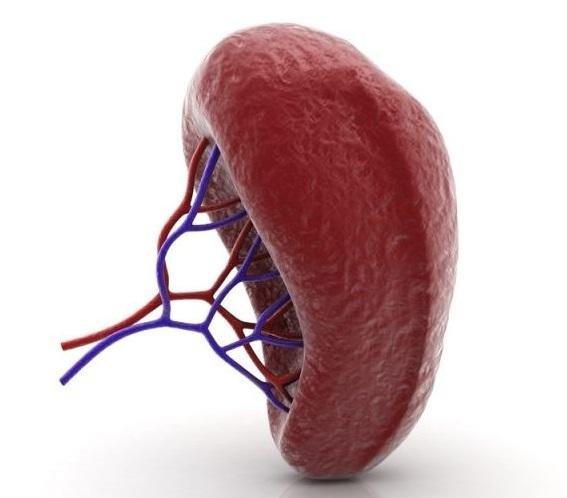 Какие болезни крови можно победить с помощью спленэктомии