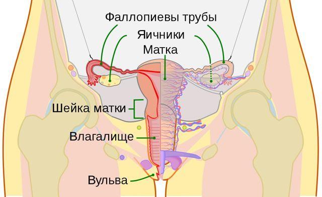 Научные труды по лечению хронического сальпингита и спайки маточных труб